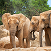 Mitsubishi Electric CC-Link Automates Elephant's Habitat Gates at the Zoo